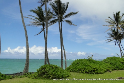 The Pacific coast at Punalu'u, Oahu, Hi, A Kamehameha Schools land asset.