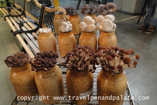 Hamakua Mushrooms, Laupahoehoe, Hi