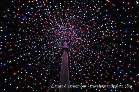 In Marion Square, Charleston, SC