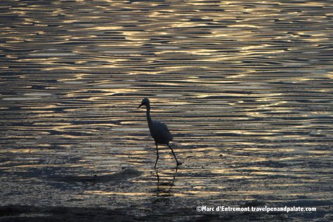 Bird in the late afternoon, St. Pete Beach, FL