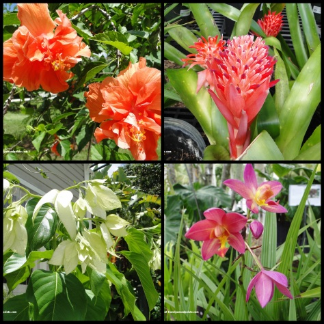 (clockwise from top left) double peach hibiscus, bromeliad, orchid, Japanese double dogwood