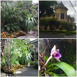 Grano de Oro interior gardens