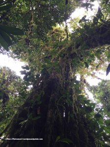 Looking up to the Cloud Forest canopy