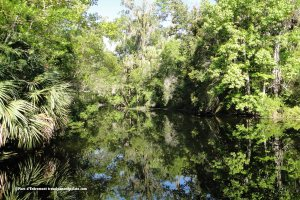 Homosassa River at Homosassa Springs Wildlife State Park