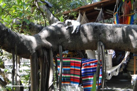 contented cats & craft sellers on La Islita del Rio Cuale, Puerto Vallarta