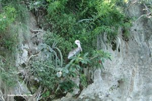 sea birds nesting on cliffs of the islands, Los Arcos Marine Park